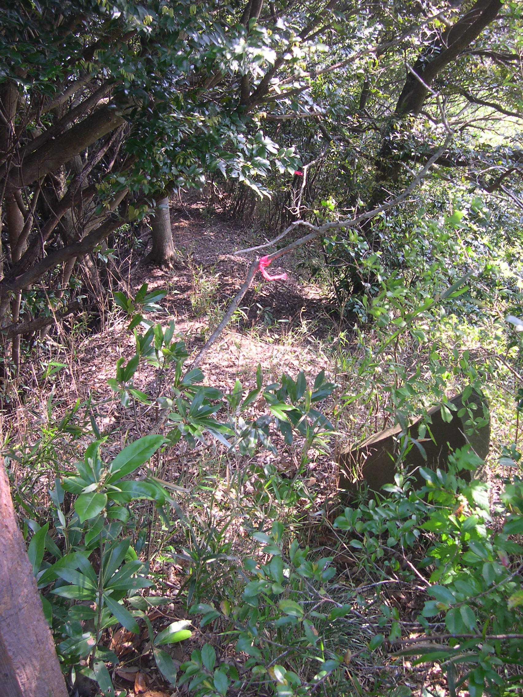 三角点桜井への道