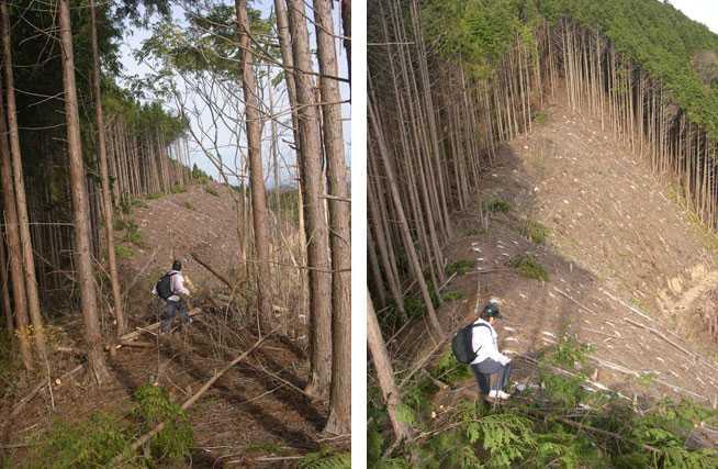 伐採地を進む