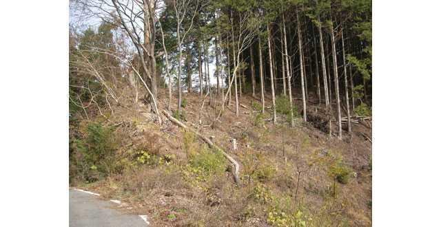 愛宕山山頂への道3