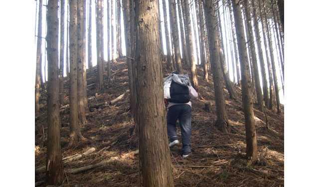 愛宕山山頂への道4
