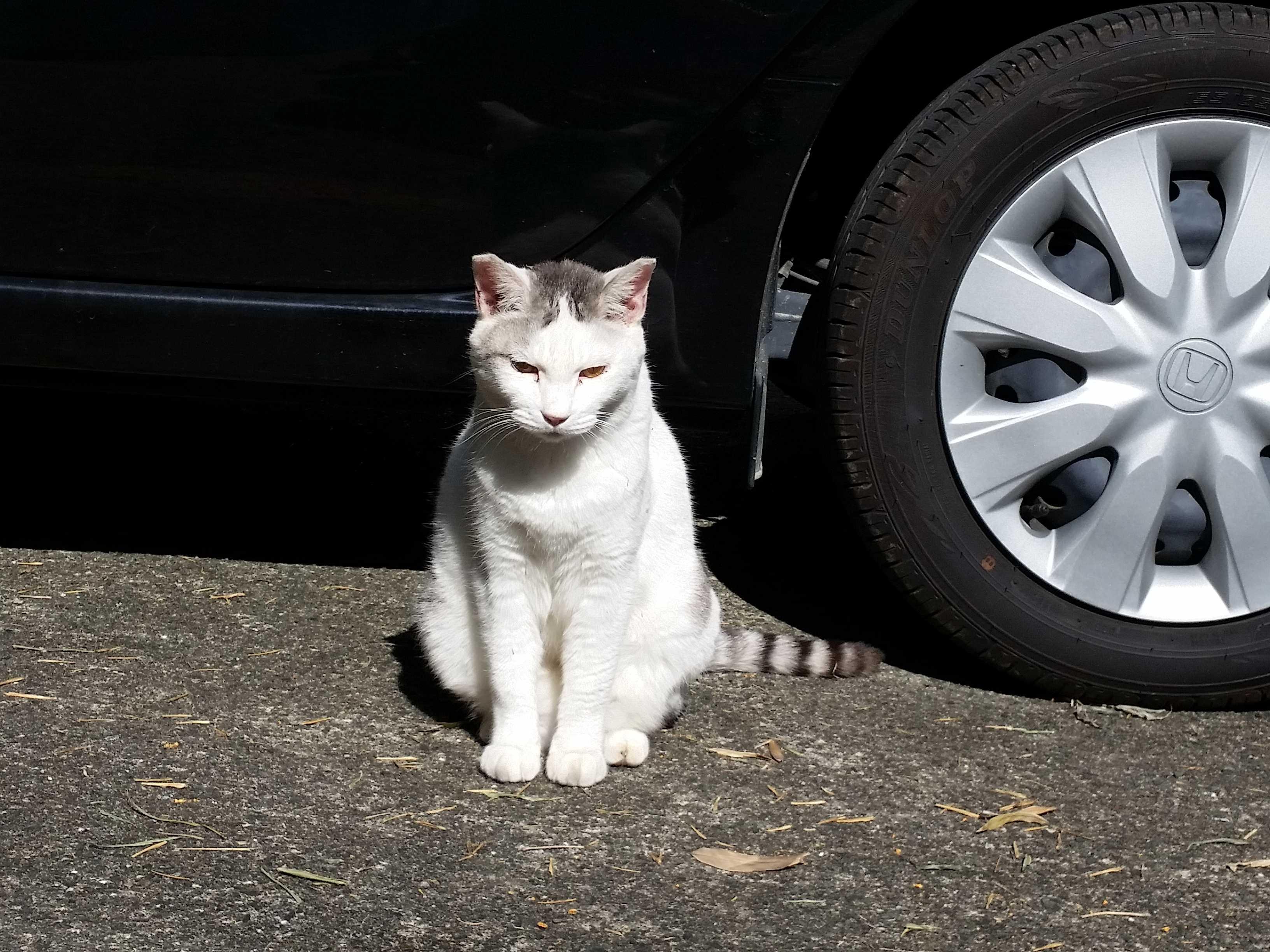 野良猫スーちゃん