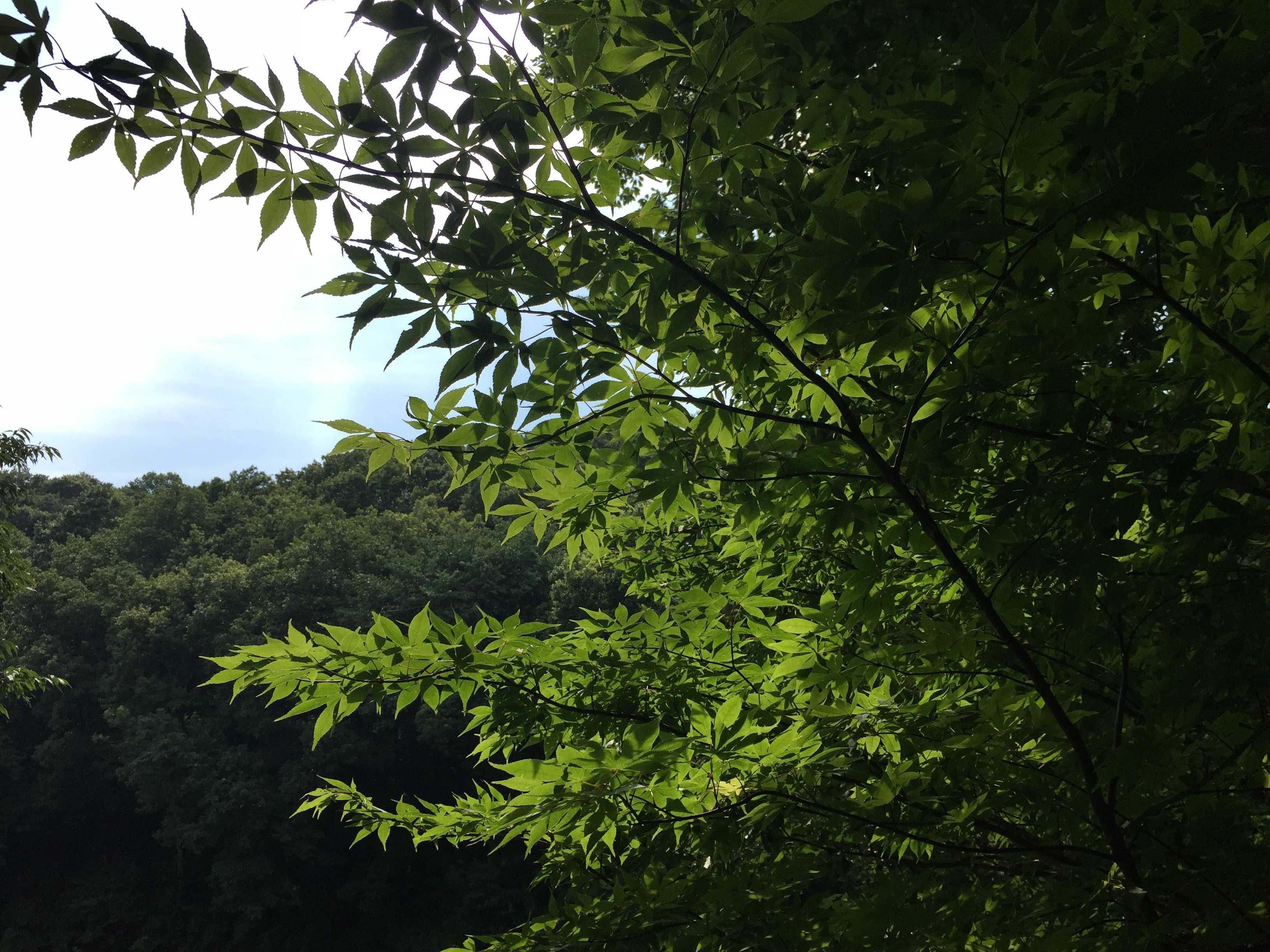 葉っぱの緑