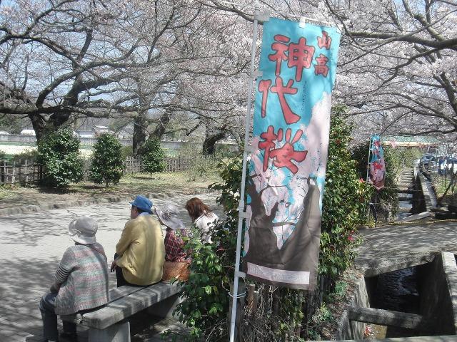 山高神代桜のノボリ