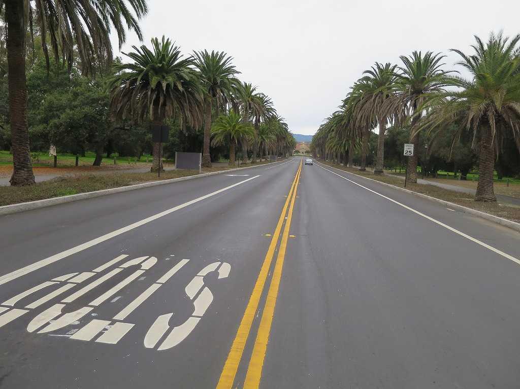 スタンフォード大学のキャンパス内の道路