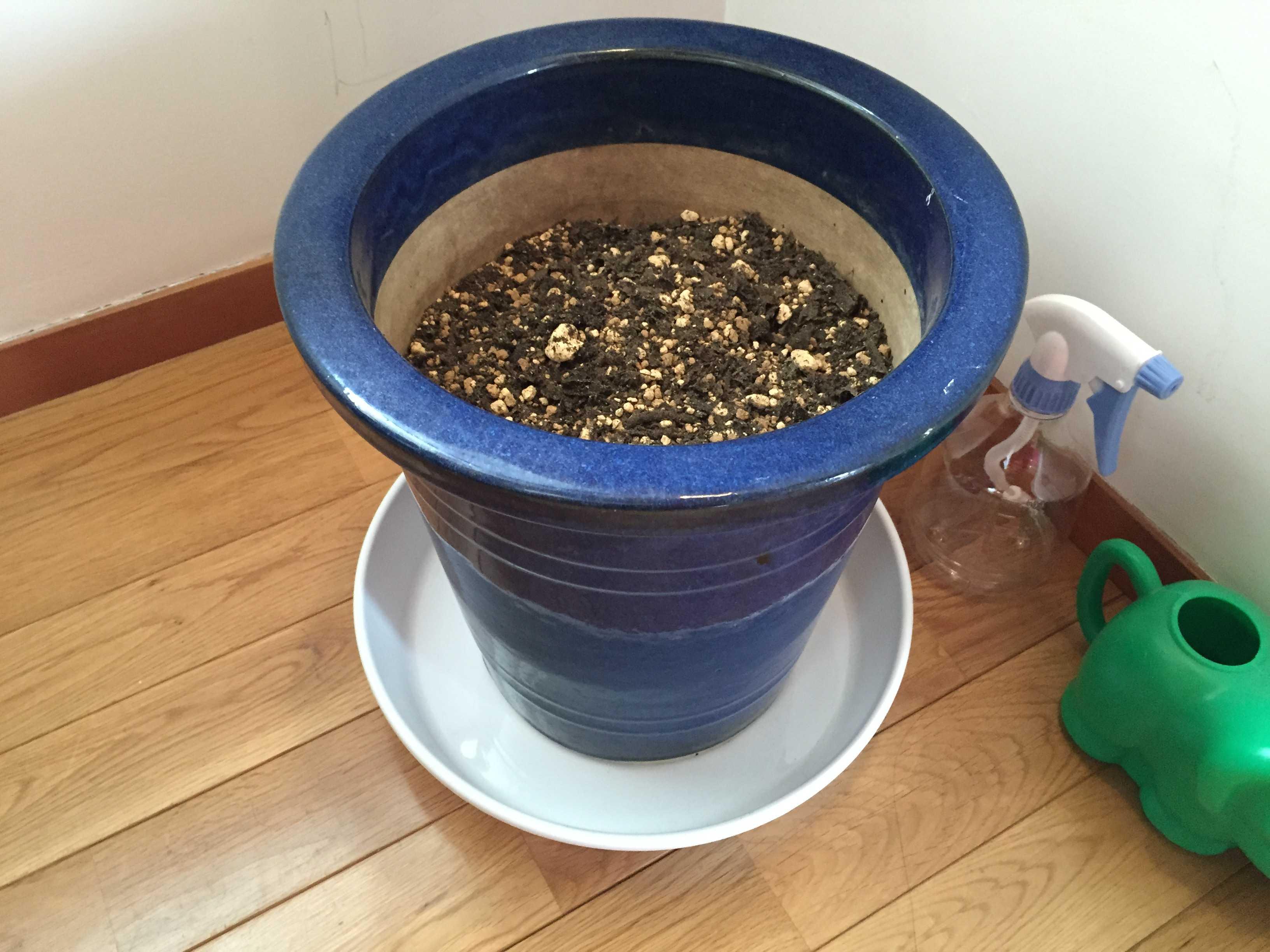 土作りしておいた鉢