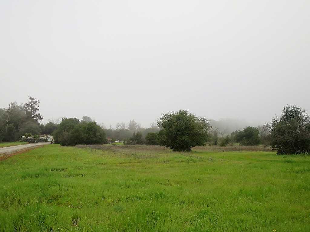 サラトガ・アベニュー、自然がいっぱい