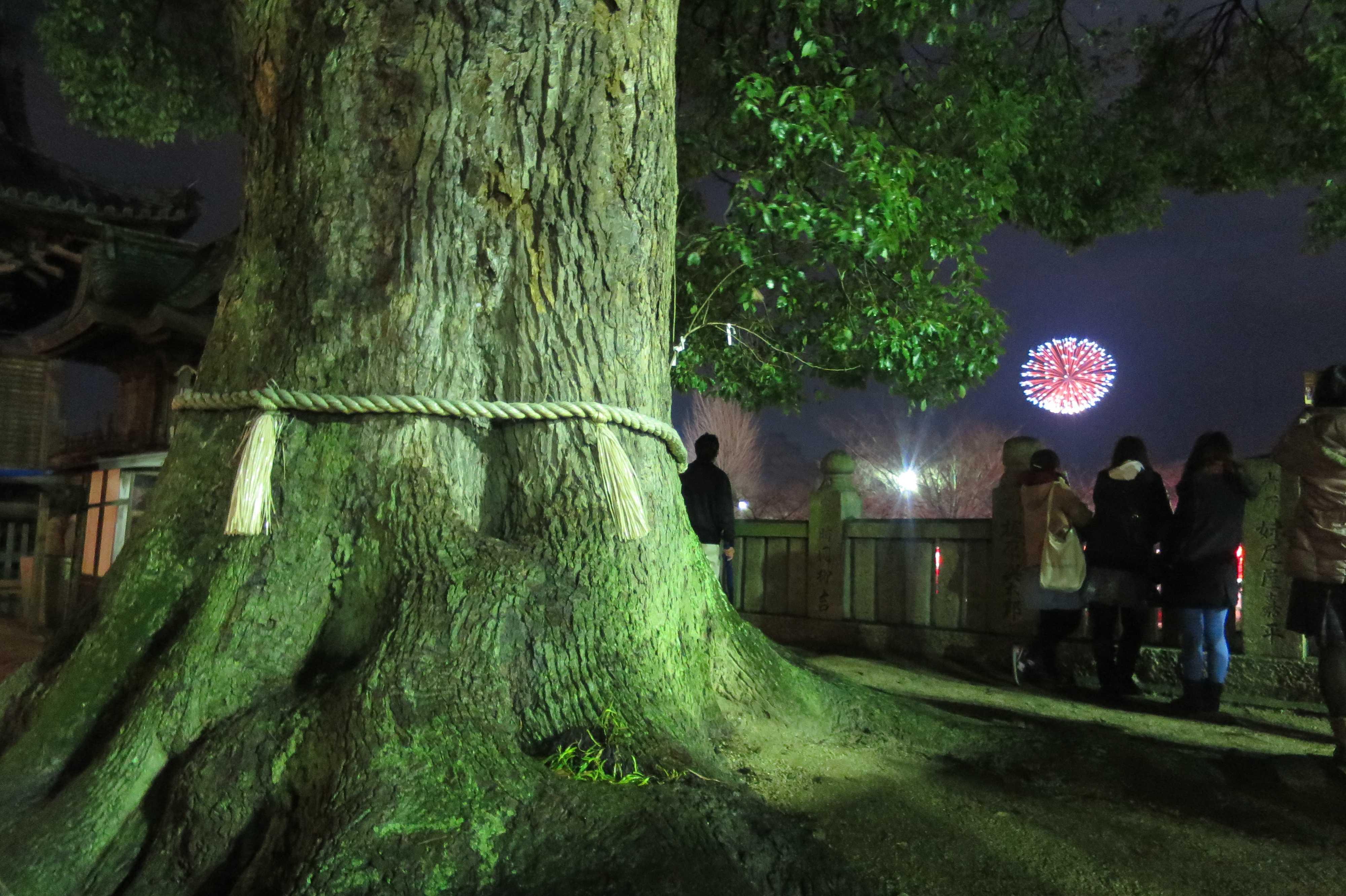 西大寺の大楠越しの会陽冬花火
