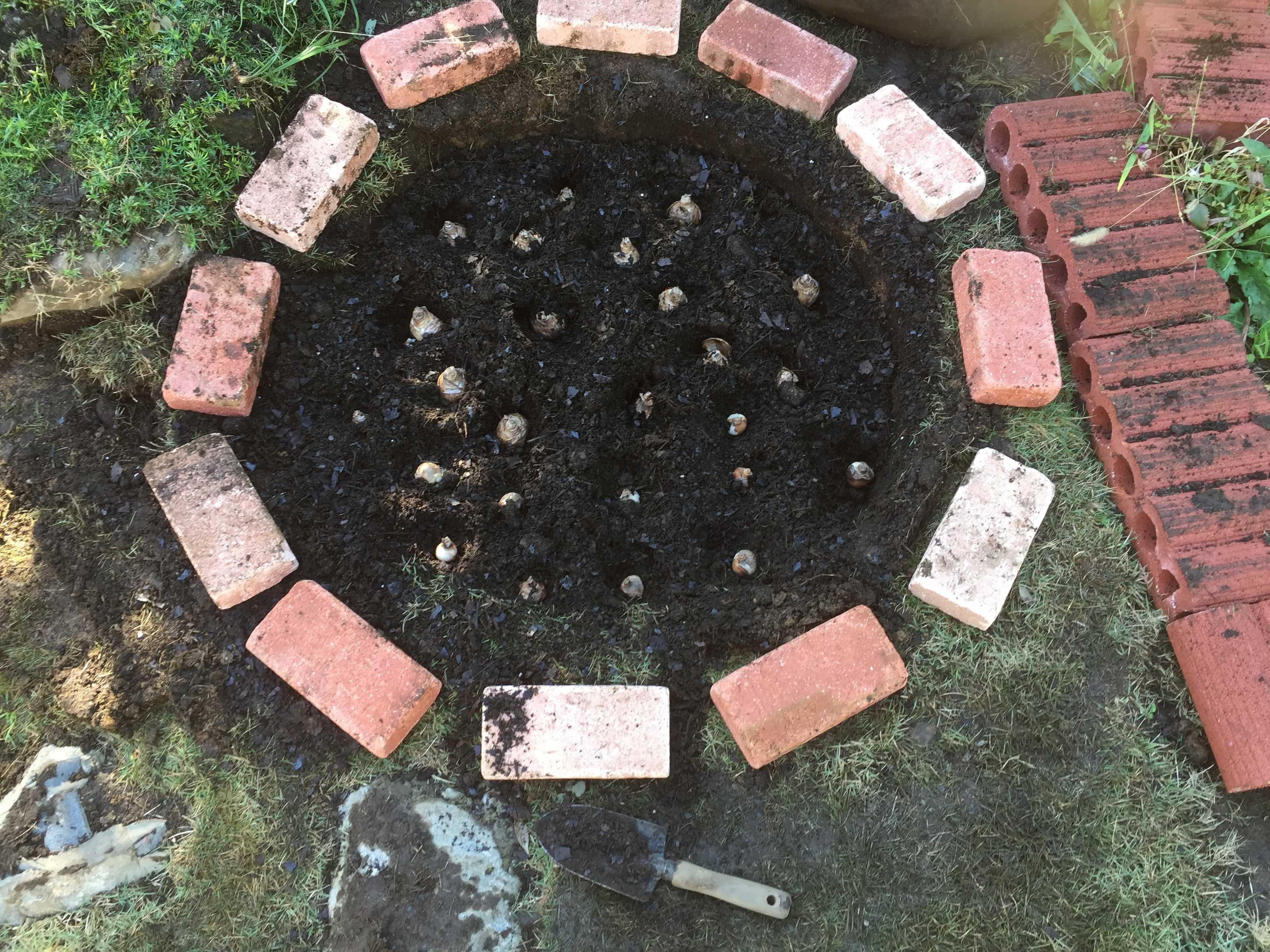 水仙/スイセン(デリベスとミノウ)の球根を植え付け