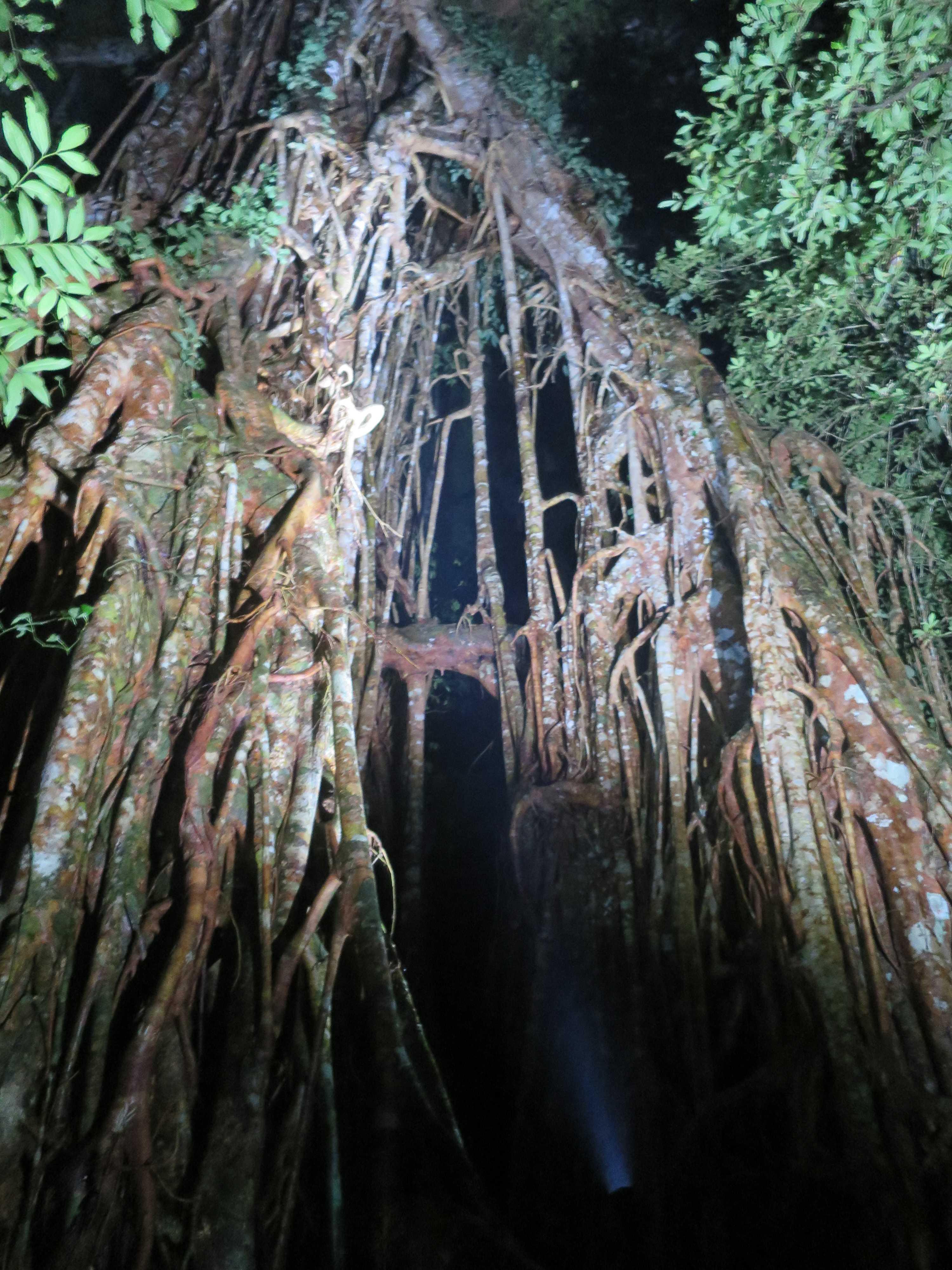 聖堂の樹の空洞