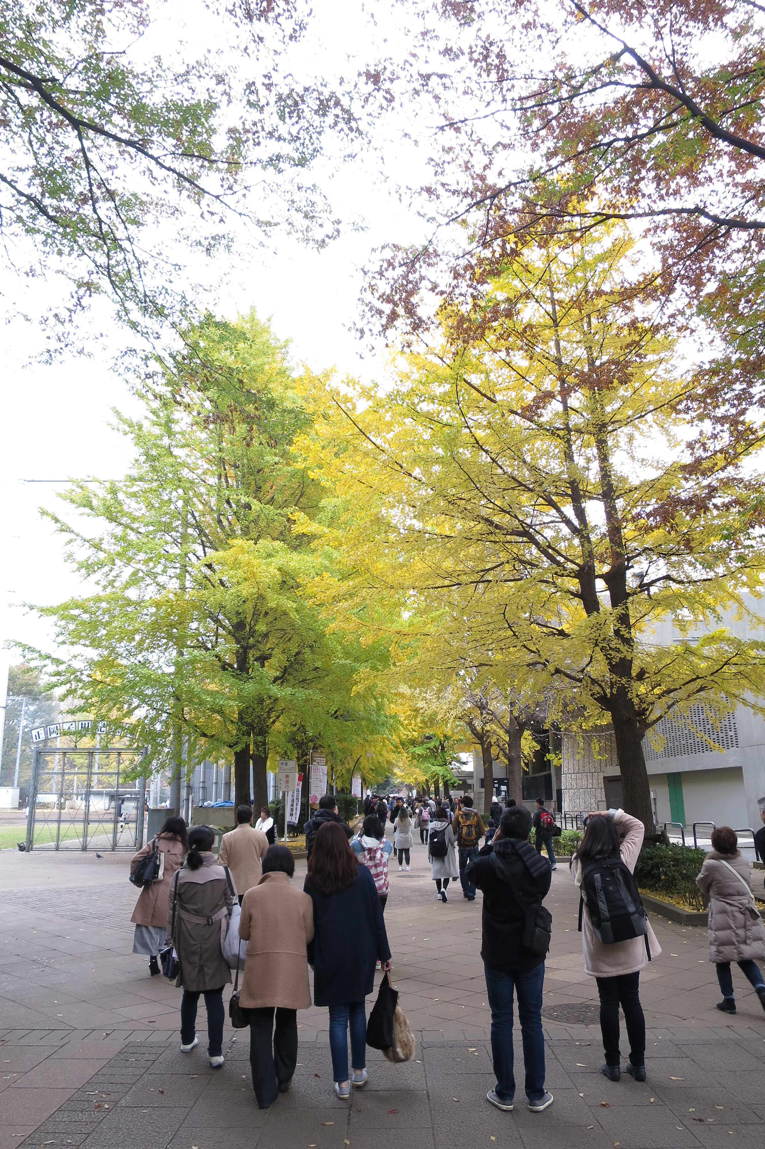 上野公園のイチョウ並木