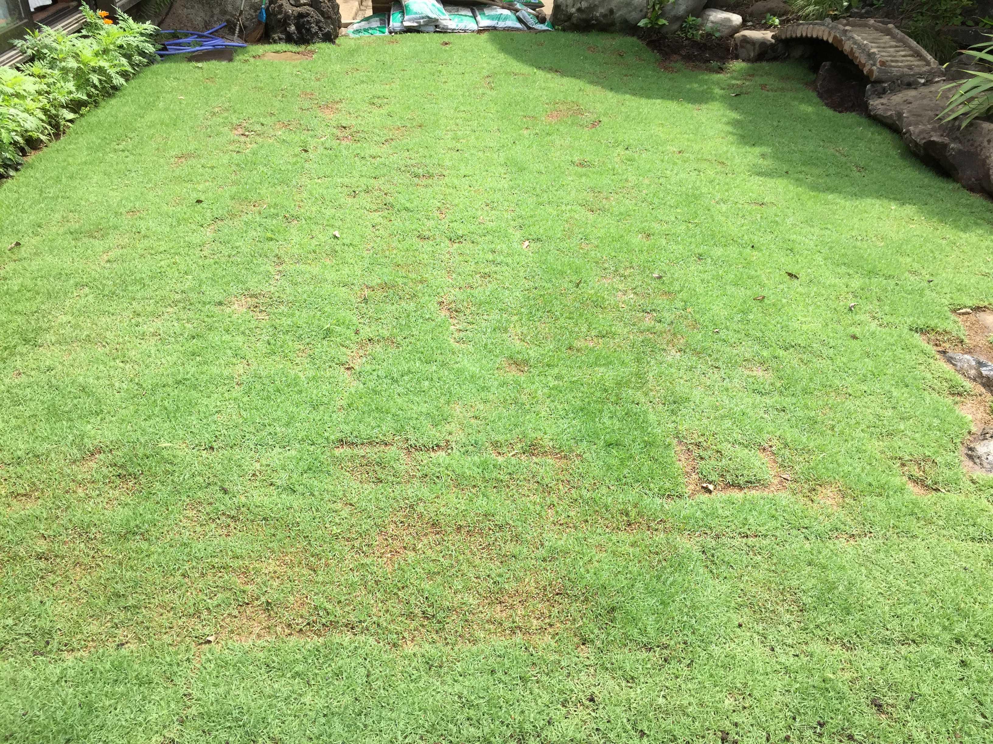 芝生が根付く - TM9(ティーエムナイン)