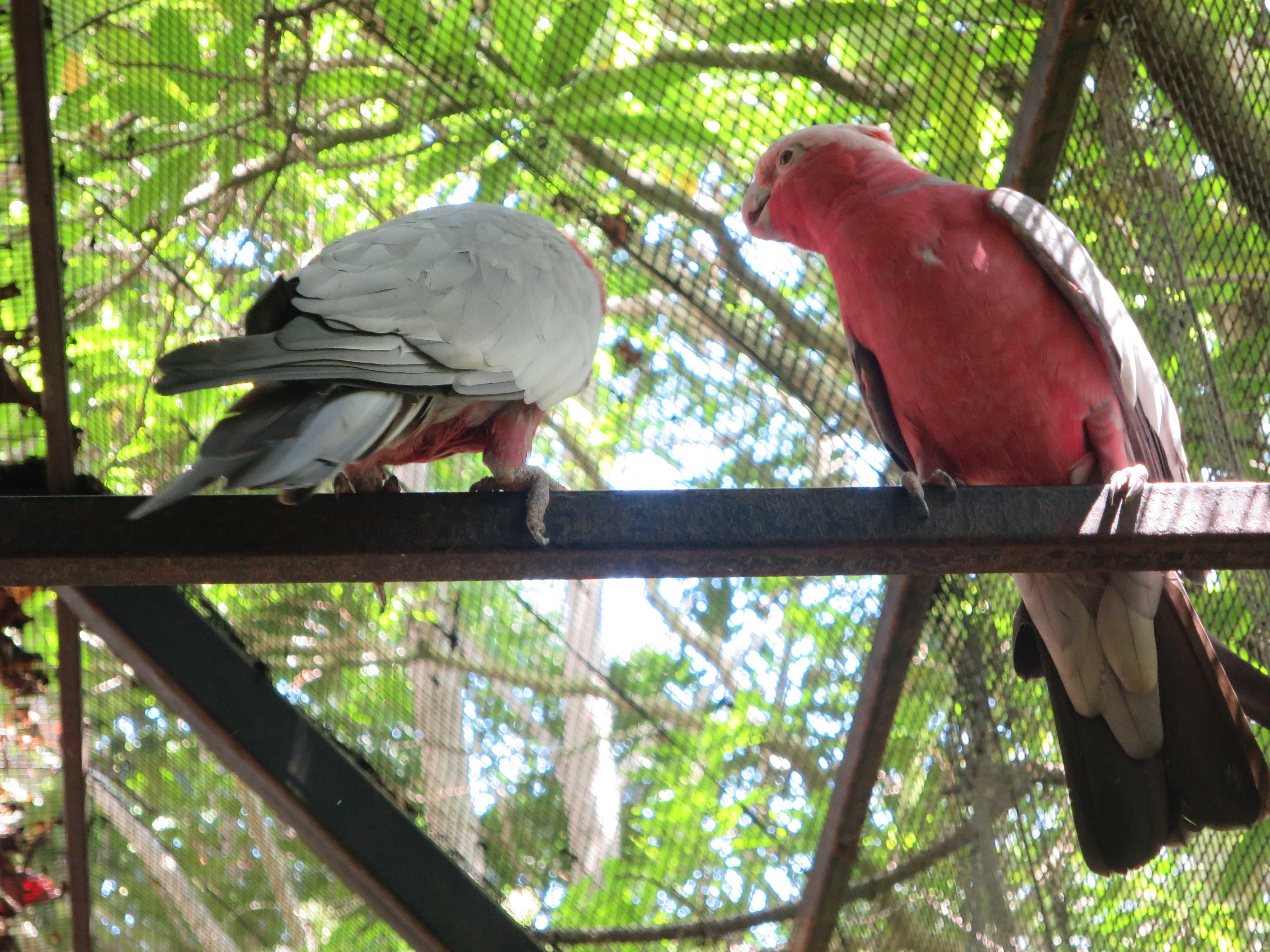 ケアンズトロピカルズー - 熱帯雨林の鳥たち