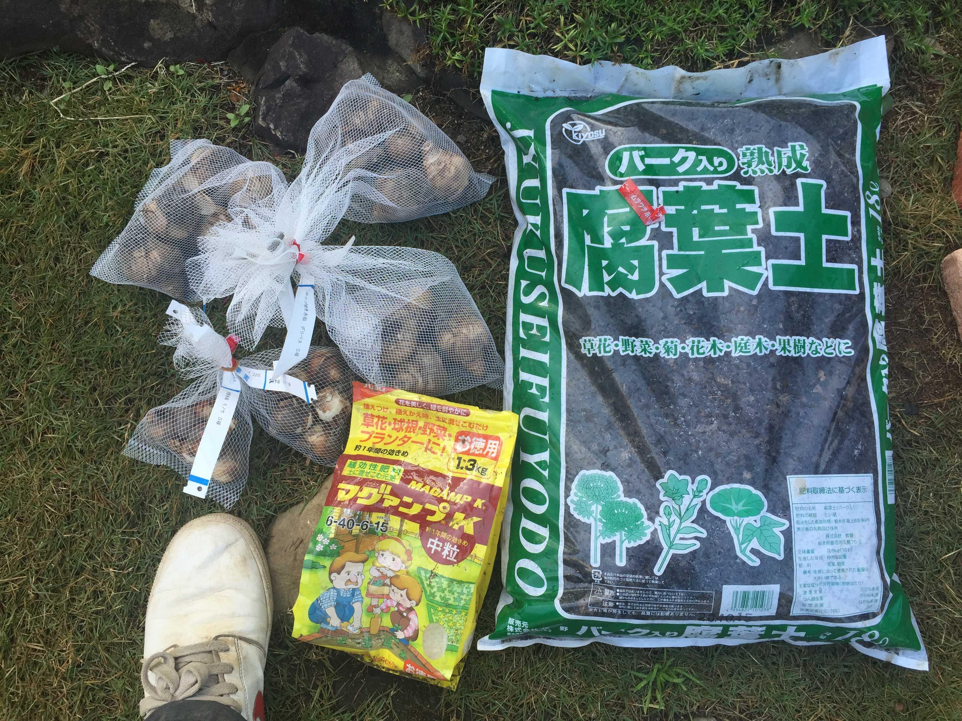 腐葉土とマグァンプK中粒(緩効性肥料) - 水仙の球根の植え方