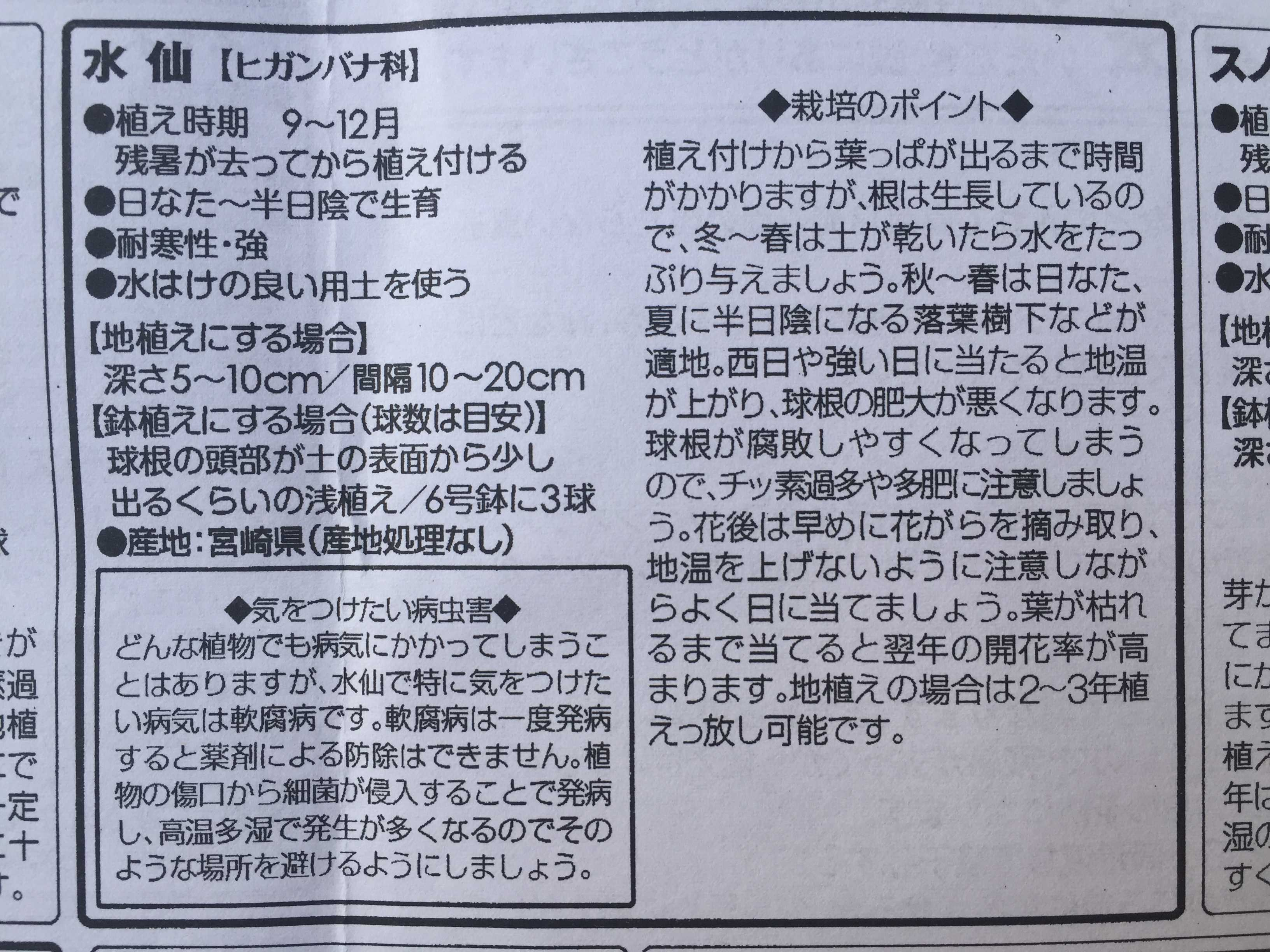 水仙【ヒガンバナ科】 地植えにする場合 深さ5~10cm / 間隔 10~20cm
