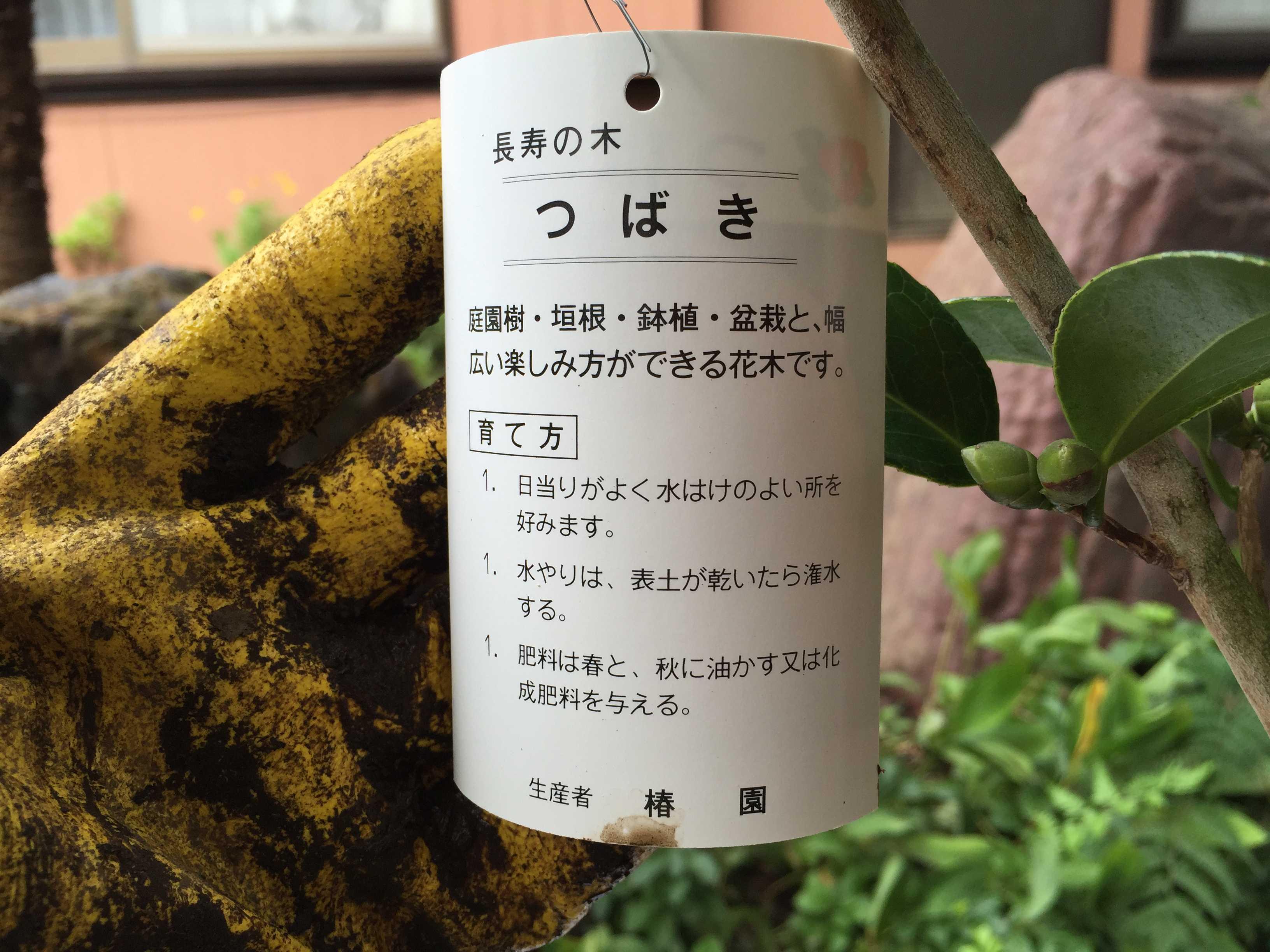 長寿の木 つばき - 庭園樹・垣根・鉢植・盆栽と、幅広い楽しみ方ができる花木