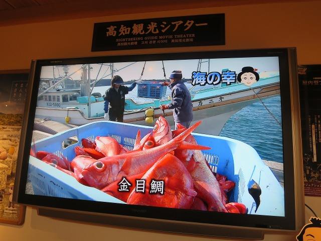 高知市観光案内所 - 海の幸