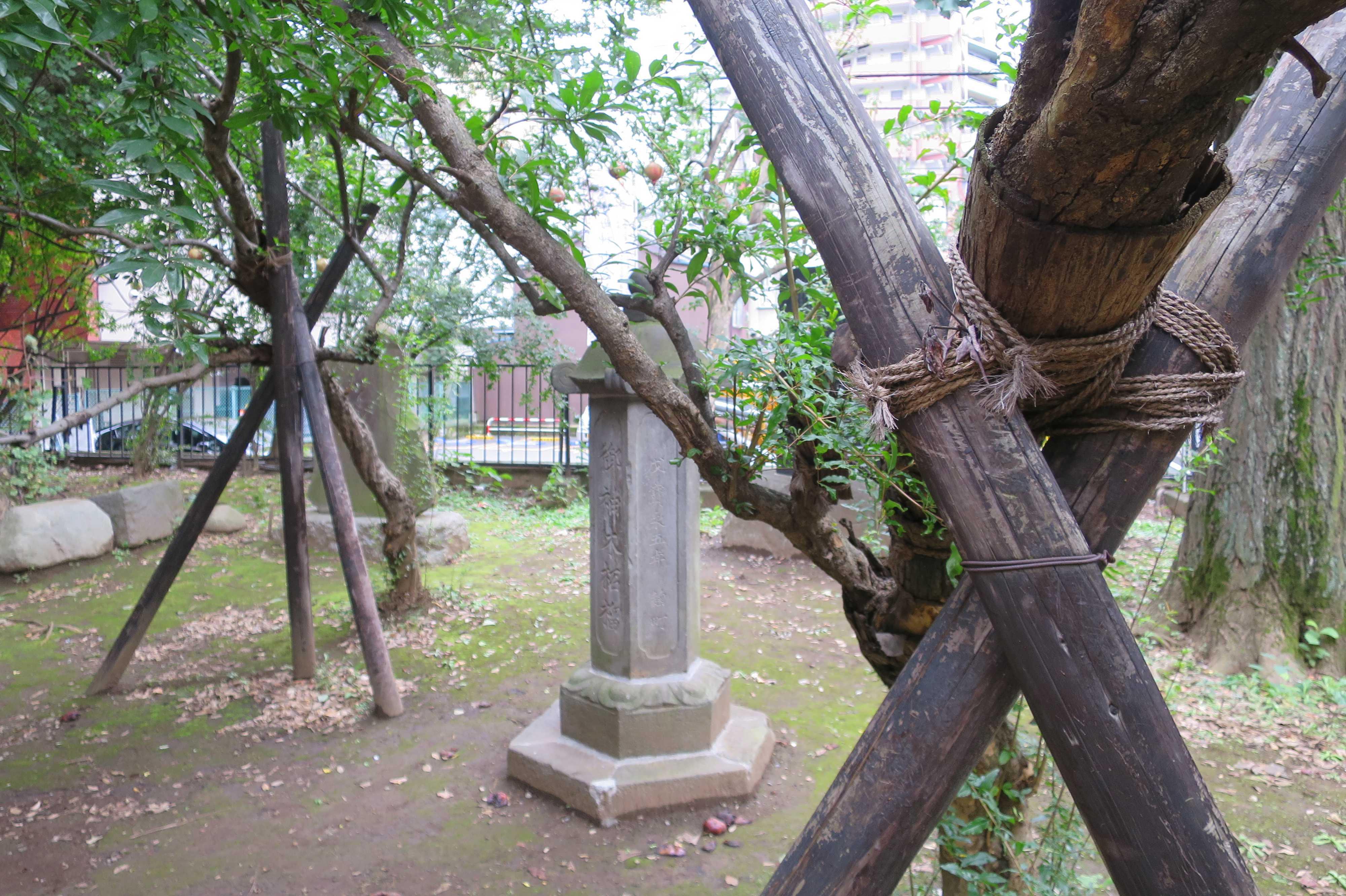 雑司が谷・鬼子母神堂 - 仲良く並んでいる 2本のザクロの木