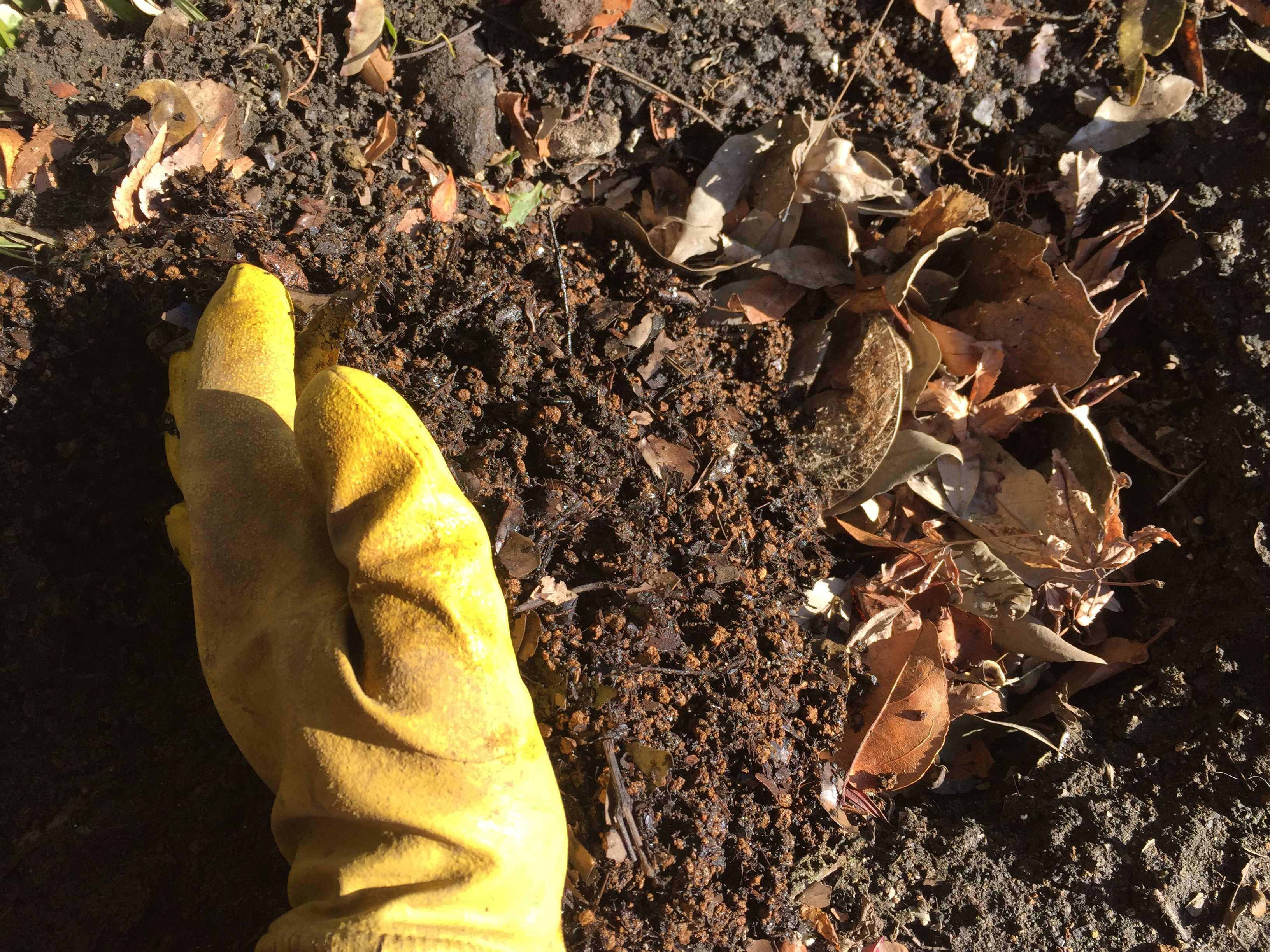 矮性サルスベリの用土(赤玉土と腐葉土)