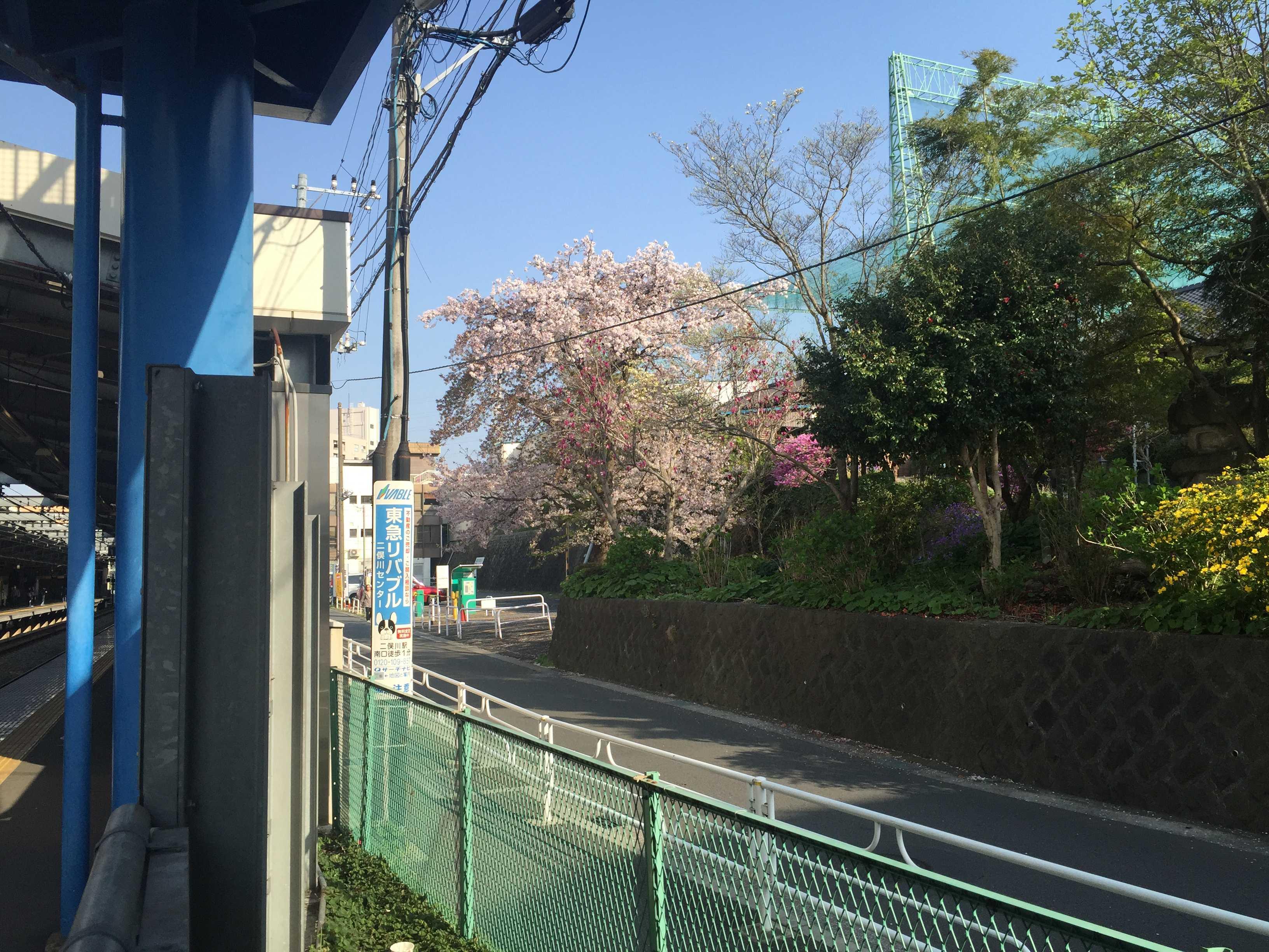 希望ヶ丘駅のホームから見えた桜の木