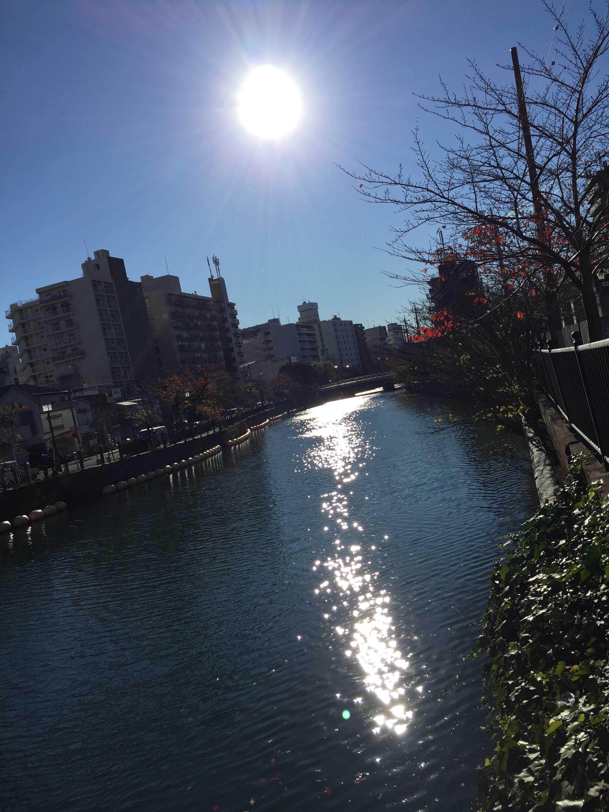 お日様に微笑まれる大岡川
