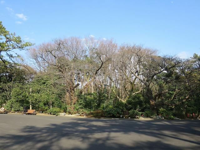 旧朝香宮邸の前庭