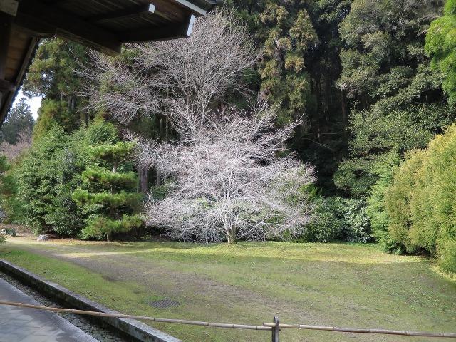 苔寺(西芳寺)の庭