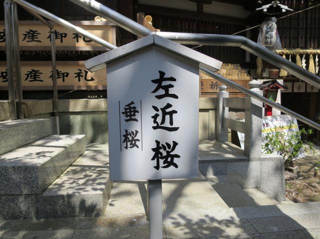 八王子・子安神社の左近桜(垂桜)