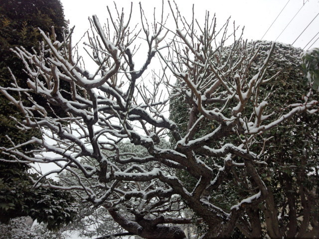 雪の日の枯れ木