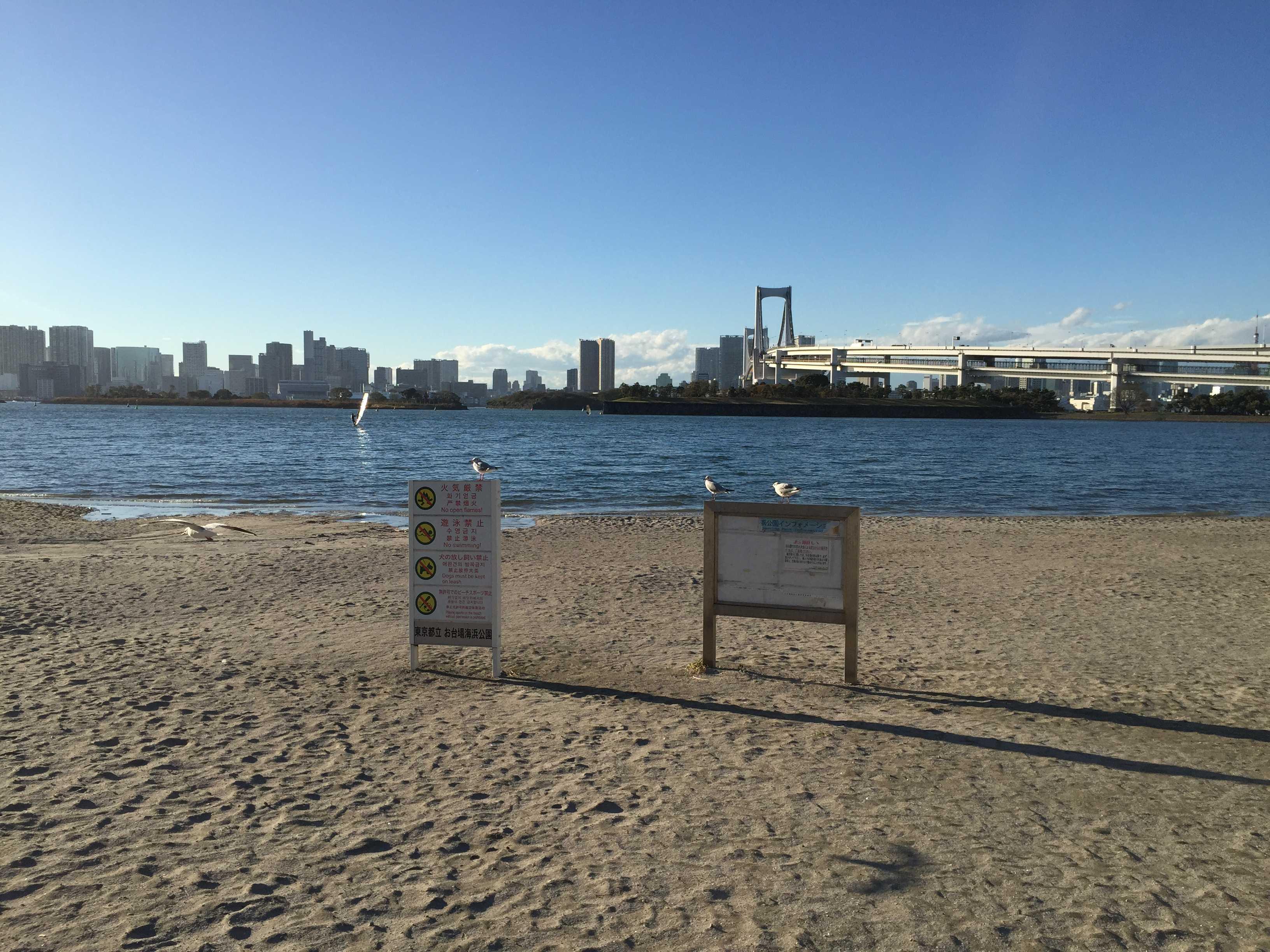 お台場海浜公園のカモメ