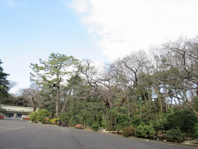 東京都庭園美術館(旧朝香宮邸)の木々