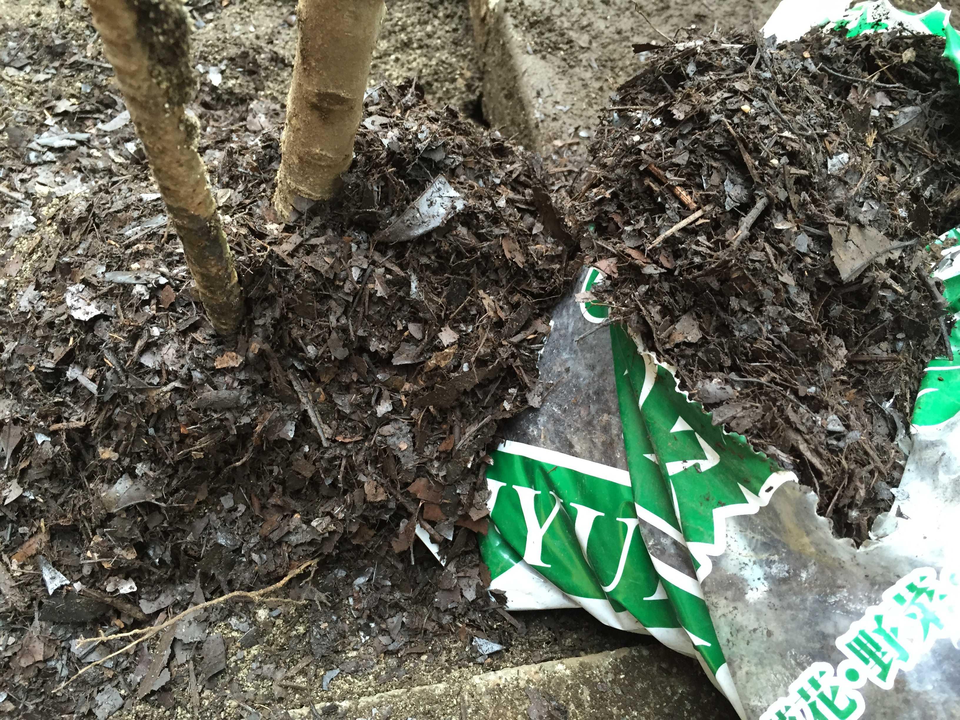ザクロの植え付け: 腐葉土