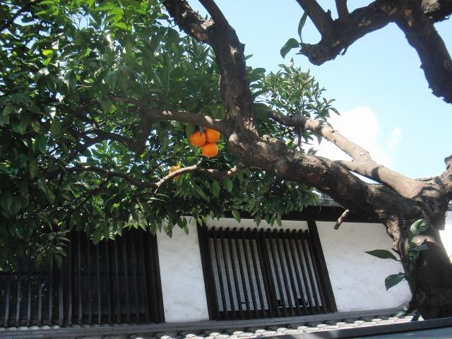 鞆の旧家の庭先のオレンジ(鮮やかなオレンジ色)