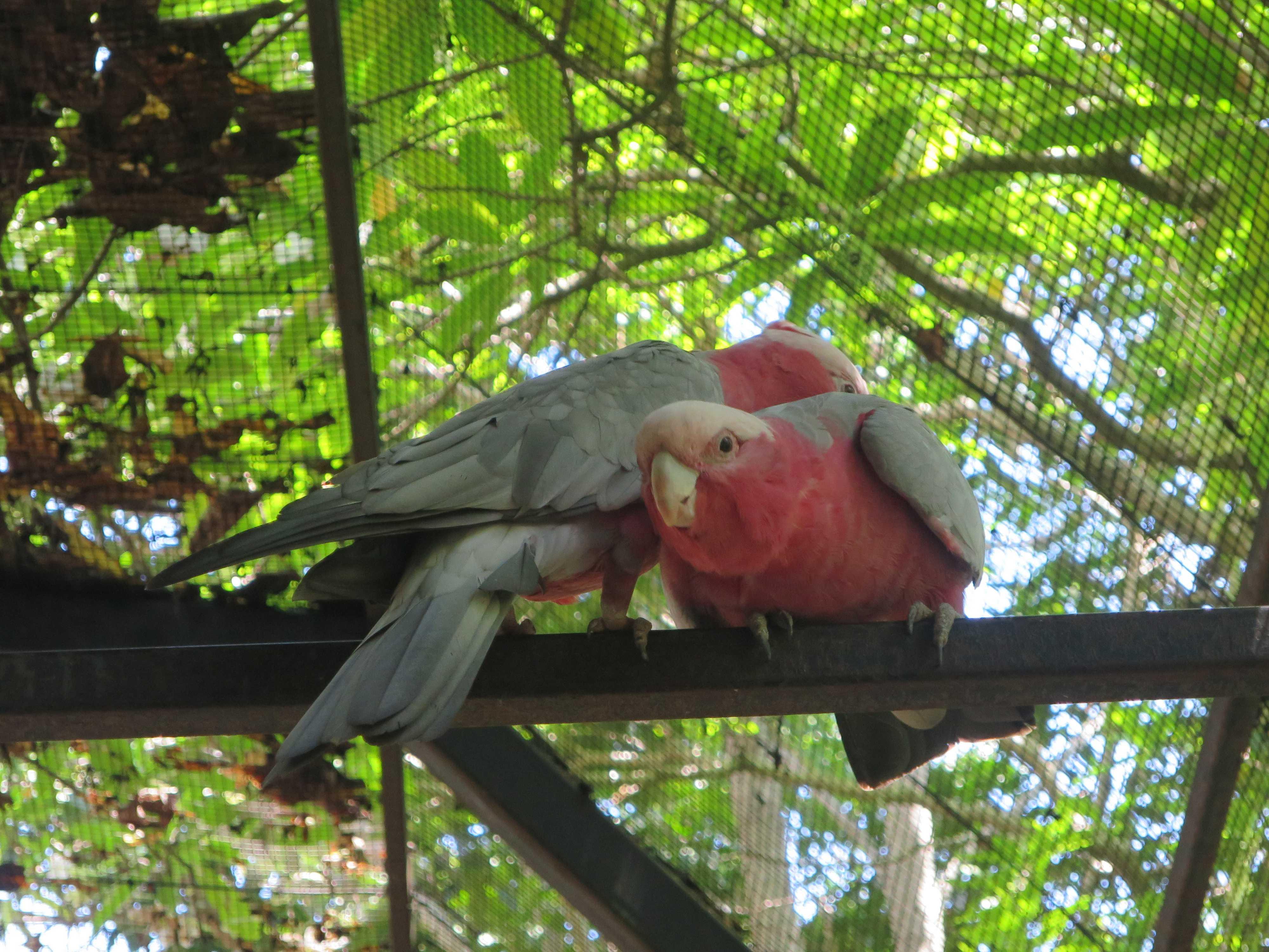 ケアンズトロピカルズー - 熱帯雨林の鳥