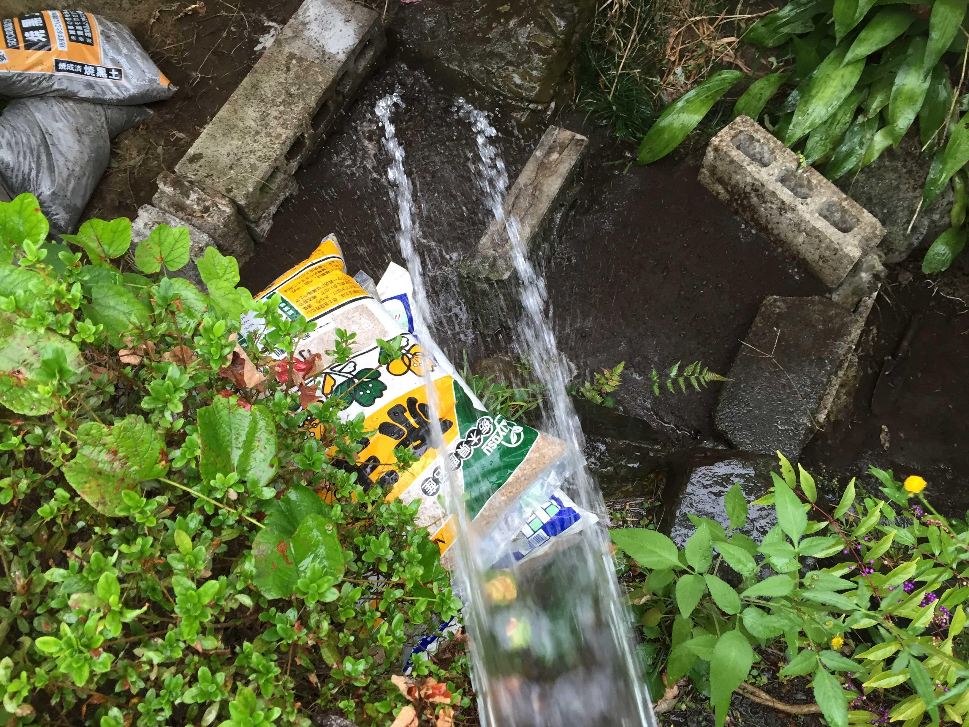 ヤマユリの鱗片定植 - 散水で土固め