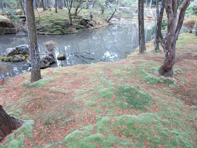 苔寺(西芳寺)の池