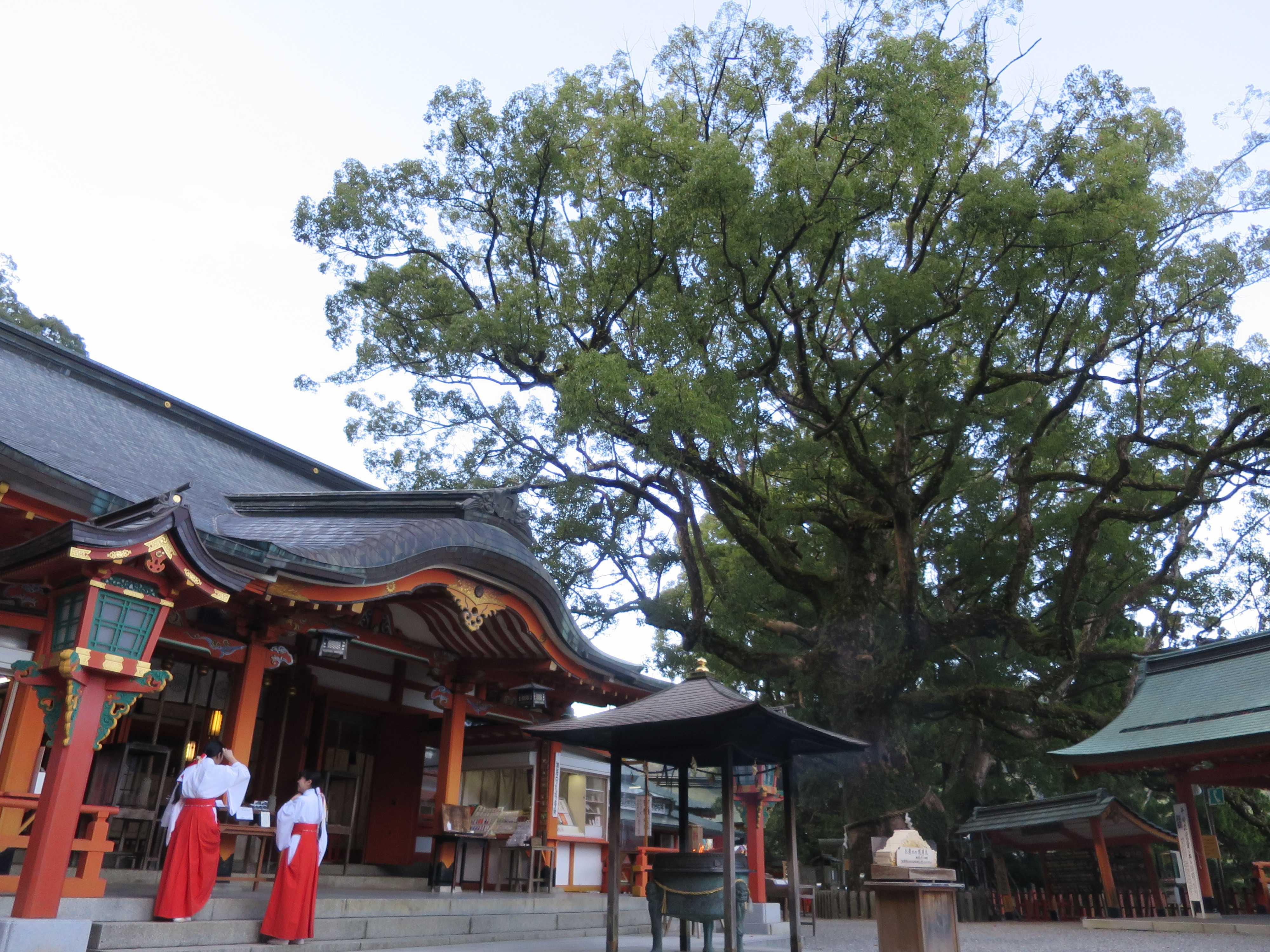 巫女さんと熊野の神と那智の樟