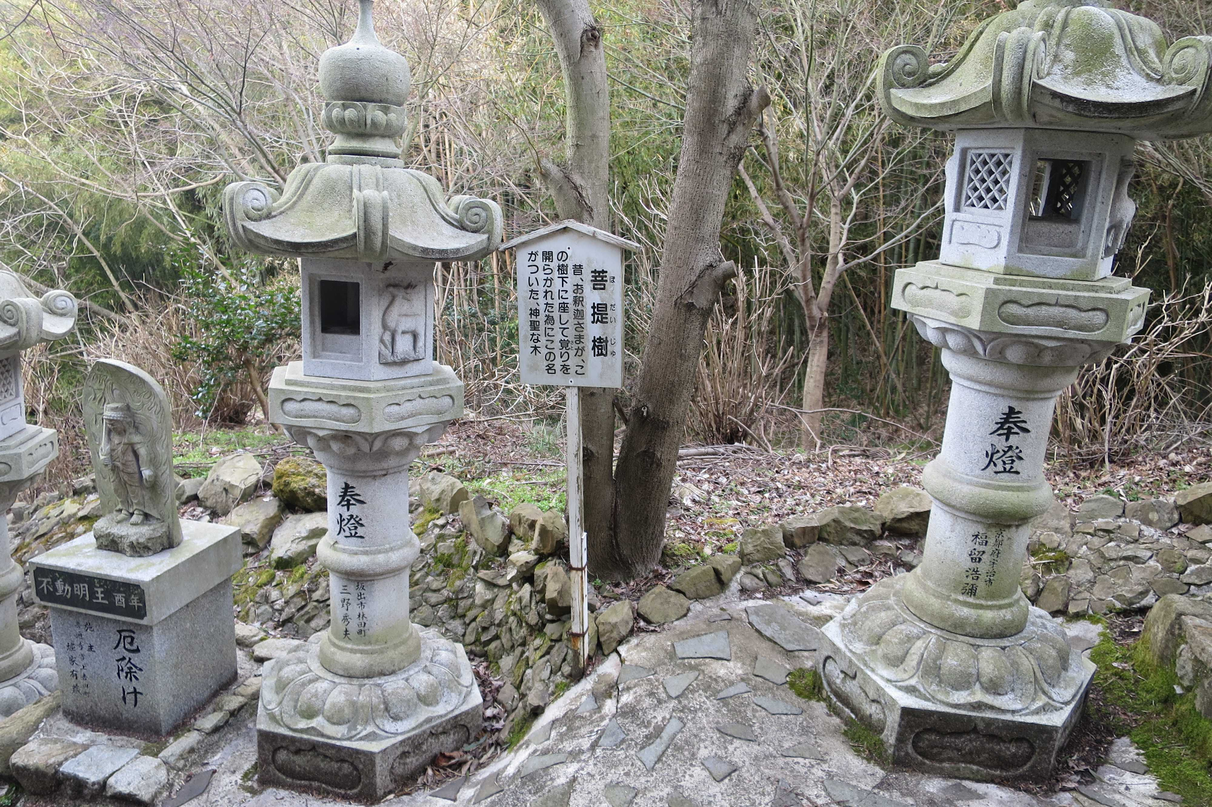 菩提樹 - 奥の院捨身ヶ嶽禅定