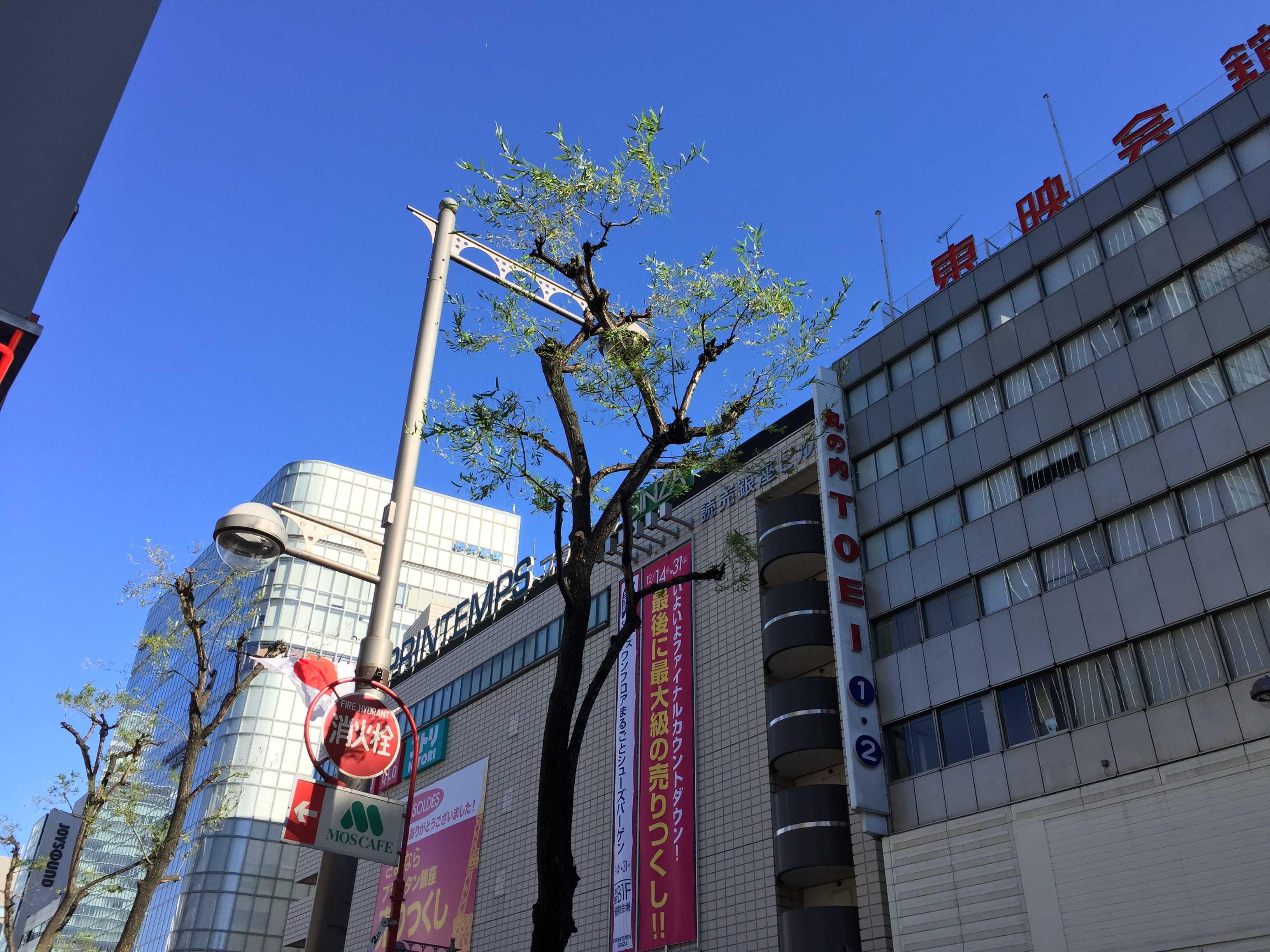 銀座の柳で♪ - 東京ラプソディ