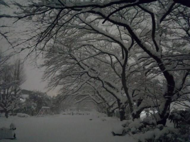 大雪の日の元横山公園(東京都八王子市)