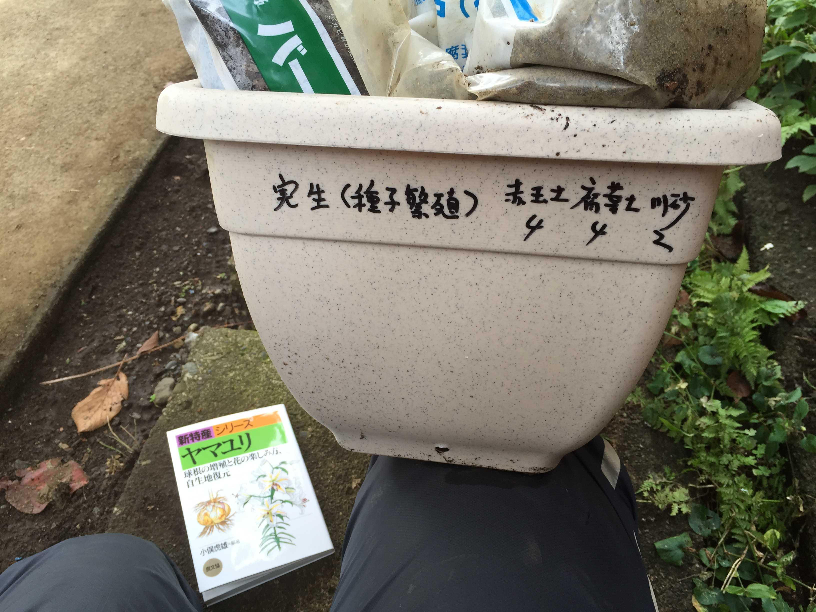 ヤマユリの種子繁殖/実生 - プランター(育苗箱)の土づくり