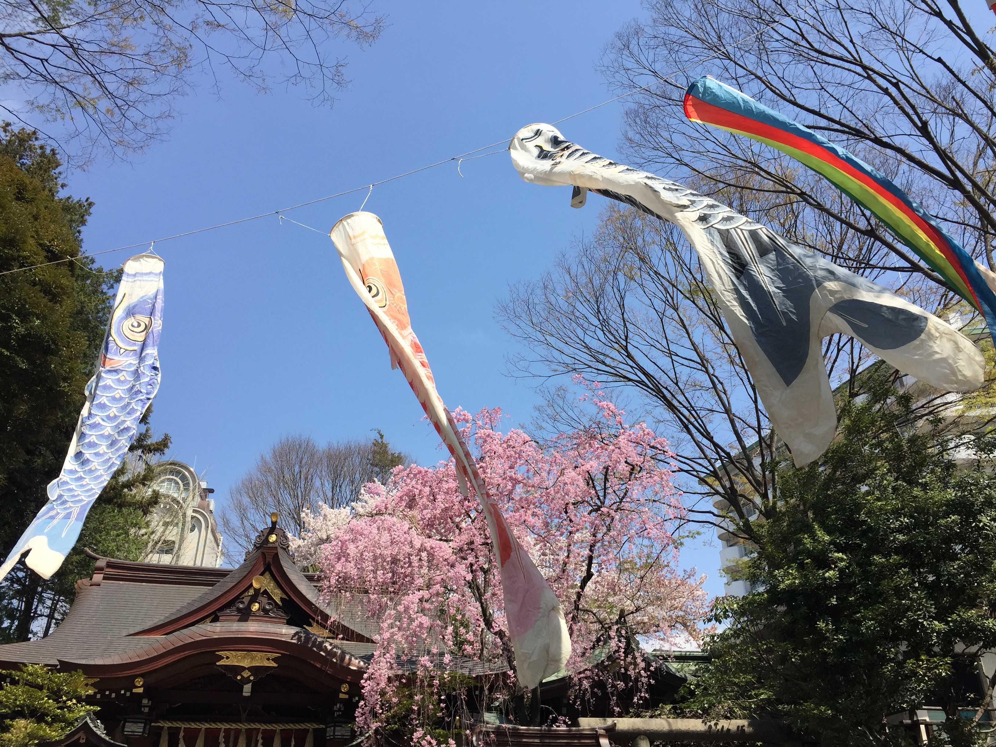 子安神社(東京・八王子)の鯉のぼりとしだれ桜