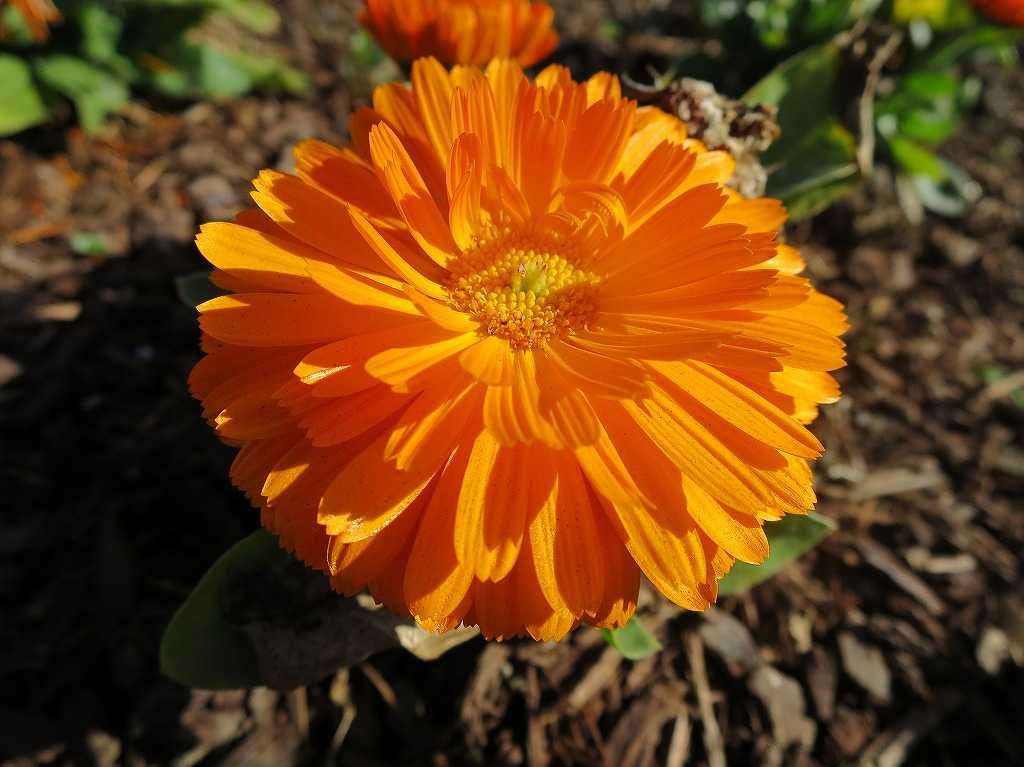 サラトガのオレンジの花