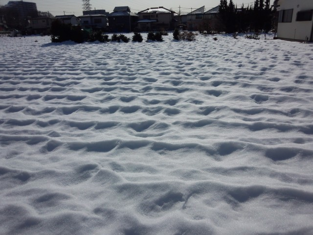 雪の畑の景色