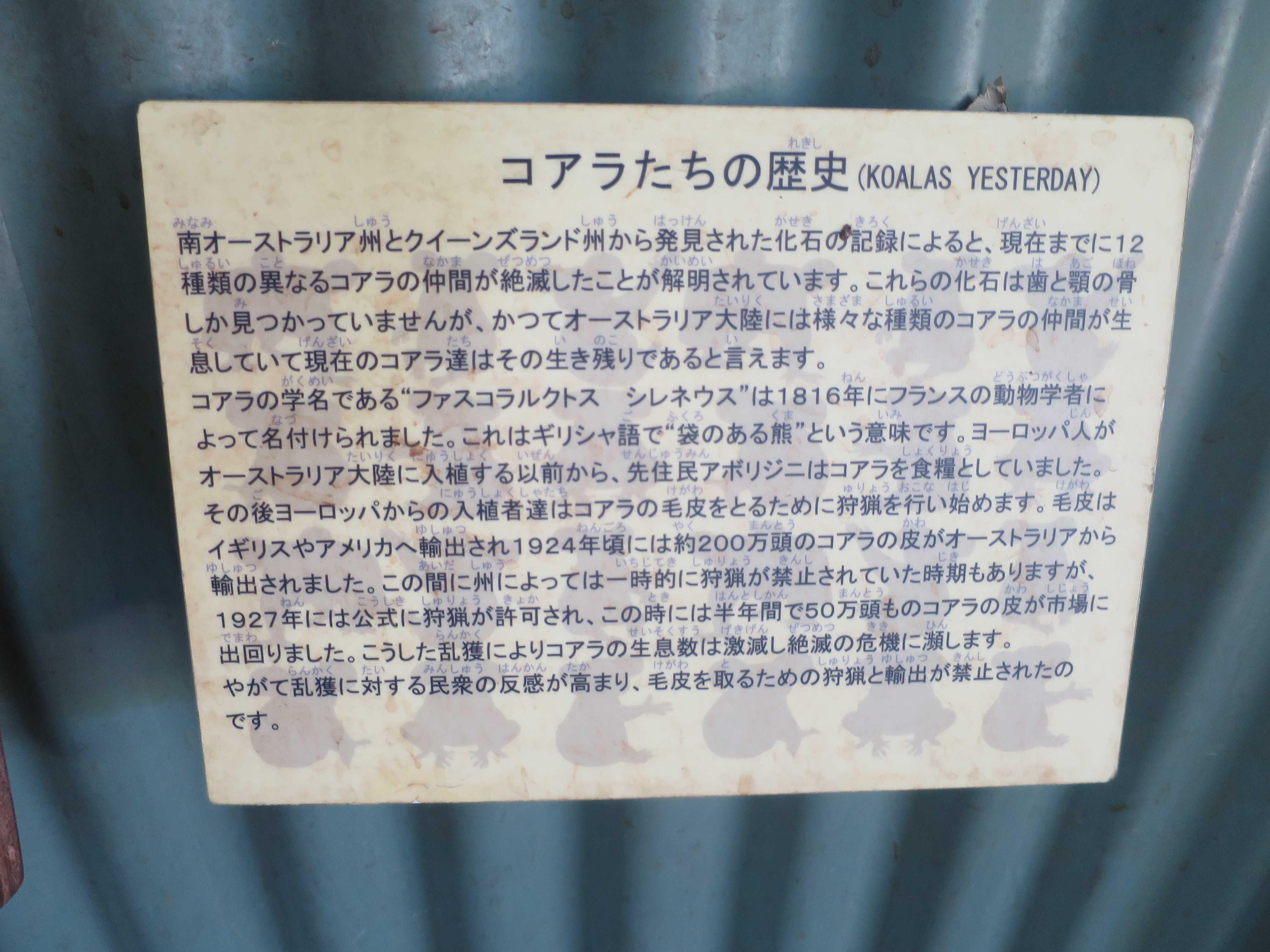 ケアンズ動物園 - コアラたちの歴史(KOALAS YESTERDAY)