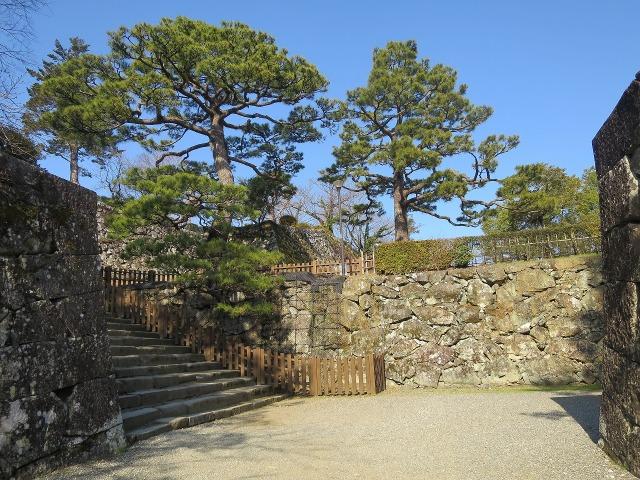 高知城の枝振りの良い松