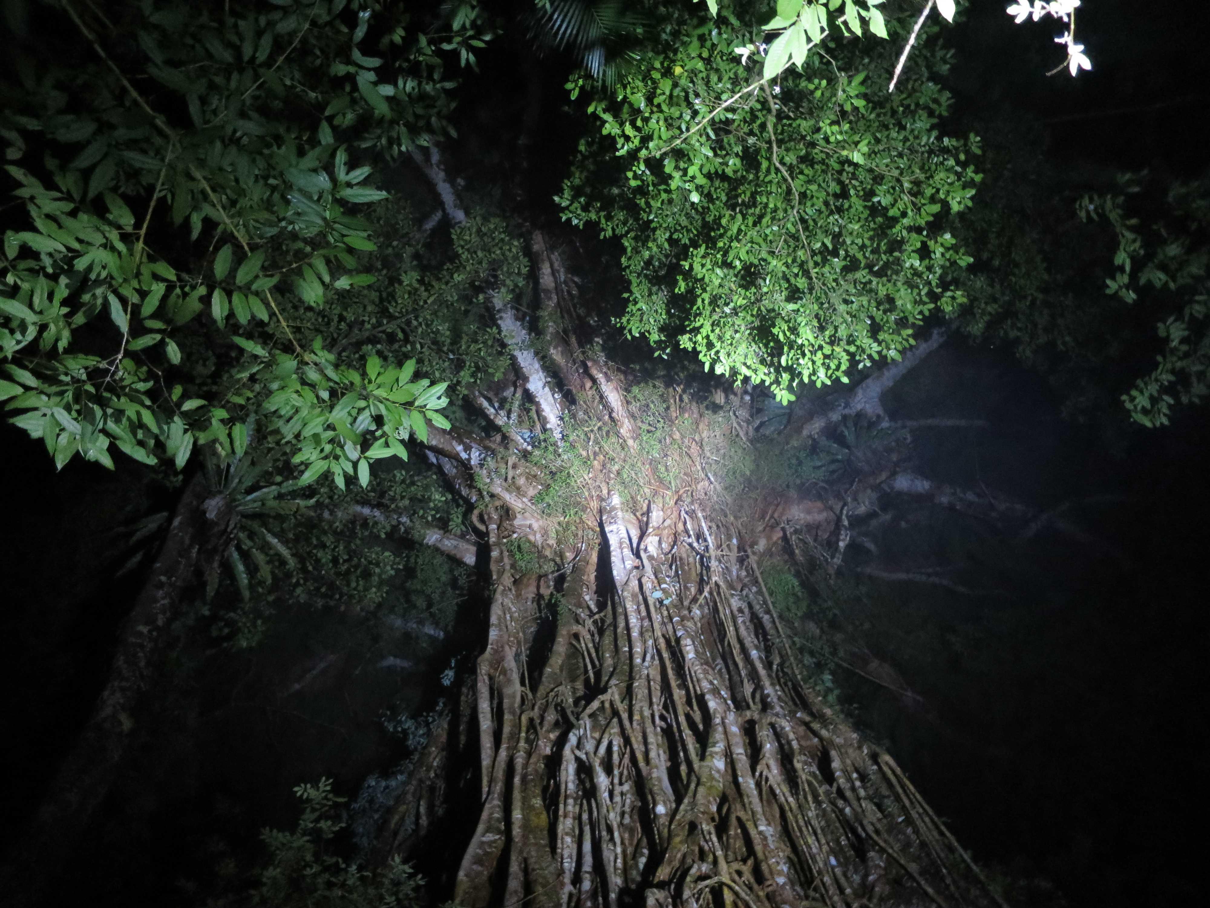 精霊が宿る木 - 聖堂の樹