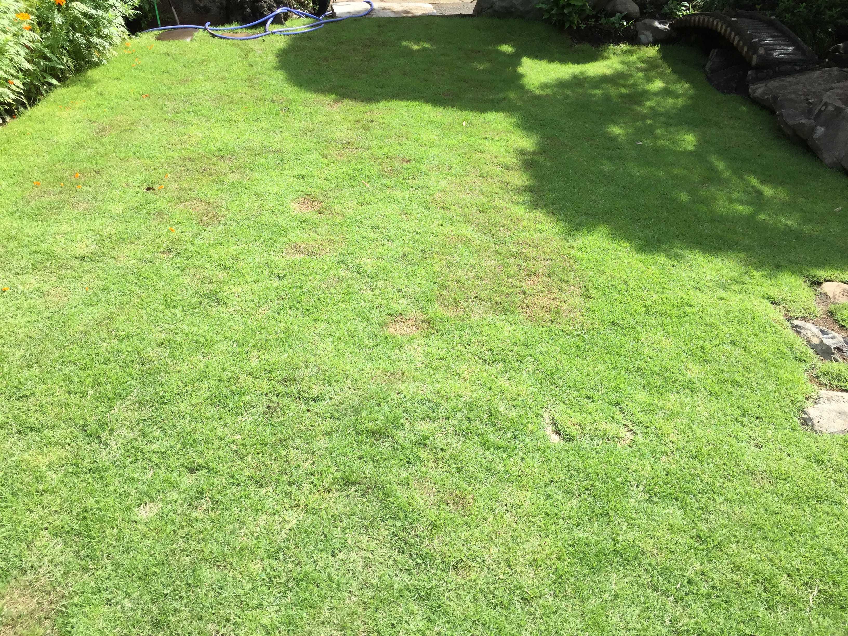 うつくしい芝生 TM9