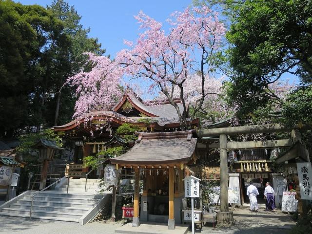青空と枝垂れ桜(八王子市)
