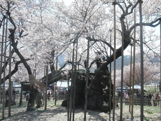 山高神代桜のつっぱり棒