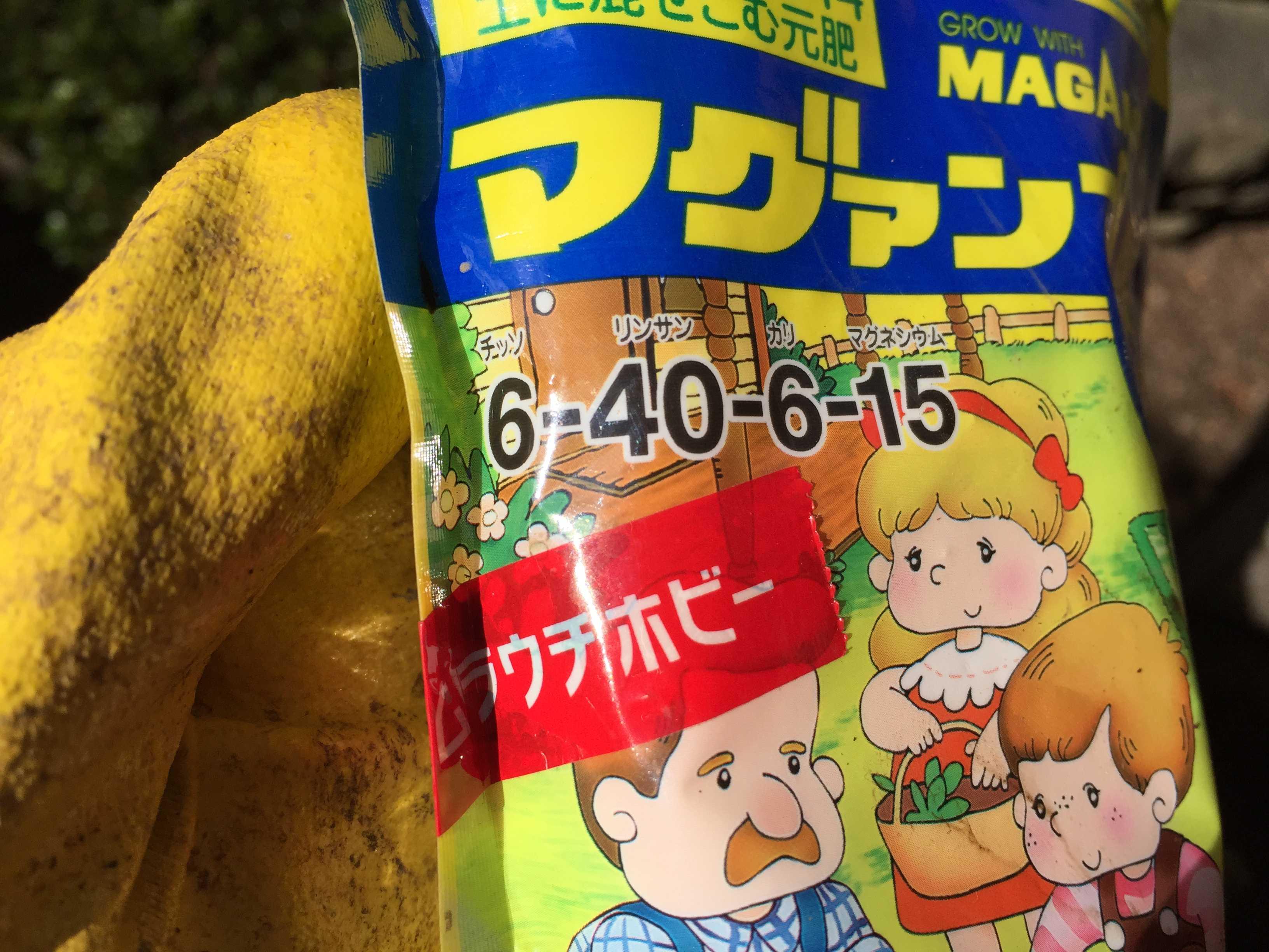 ヤマユリ庭植え - マグァンプK(リン酸主体の緩効性化成肥料)